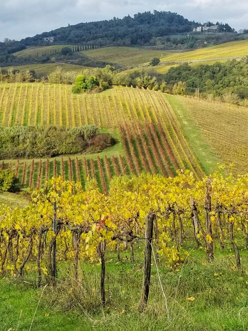 TuscanyVineyard.jpg