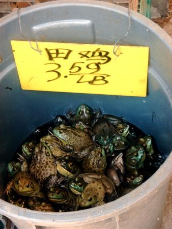 chinesefrogs.jpg